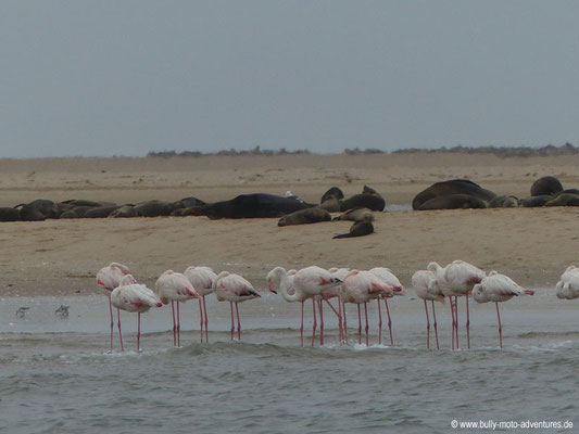 Namibia - Flamingos am Pelican Point