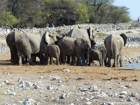 Namibia - Etosha Nationalpark - Elefanten