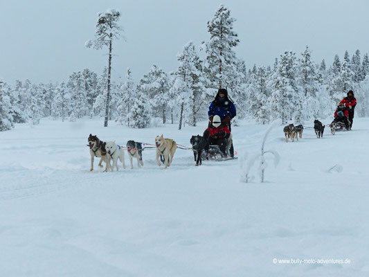 Finnland - Vorbeifahrende Hundeschlittentour