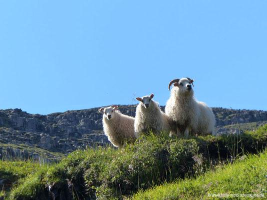 Island - Vestdalur - Wanderung in Vestdalur - Unter Beobachtung