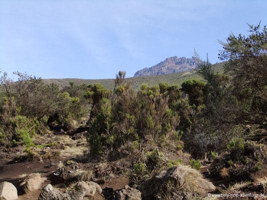 Tansania - Kilimanjaro - Marangu Route - Wanderung zu den Horombo Huts - Blick auf den Mawenzi
