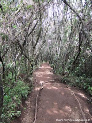 Tansania - Kilimanjaro - Marangu Route - Wanderung zu den Mandara Huts