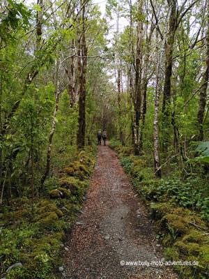 Chile - Parque Nacional Laguna San Rafael - Wanderung zur Hütte