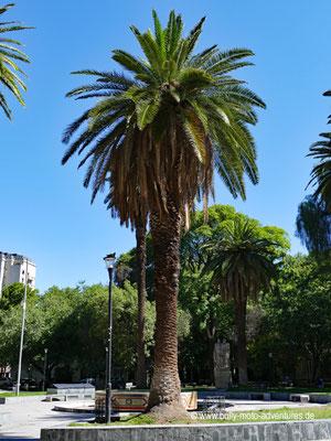 Argentinien - Mendoza - Plaza Chile