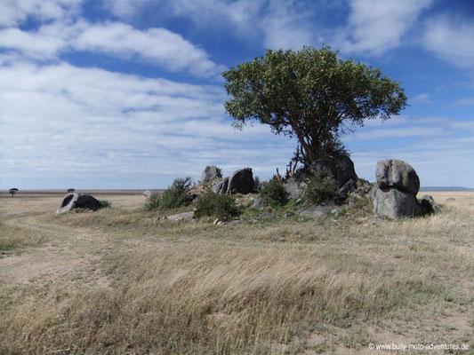 Tansania - Safari-Tour - Serengeti