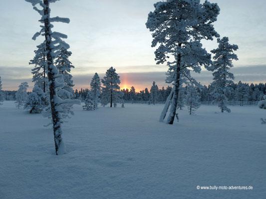 Finnland - Rentier-Safari - Winterlandschaft