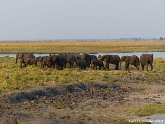 Botswana - Chobe Nationalpark - Elefantenherde