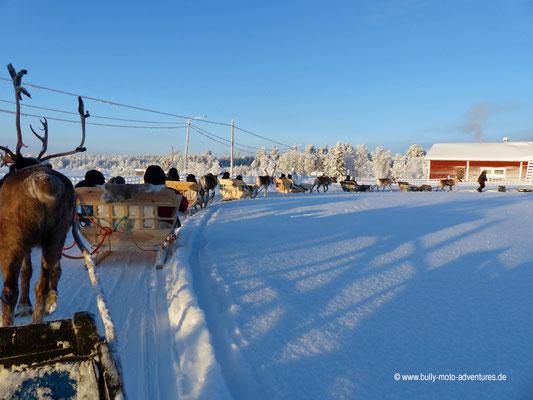 Finnland - Lappland - Auf Rentiert-Safari