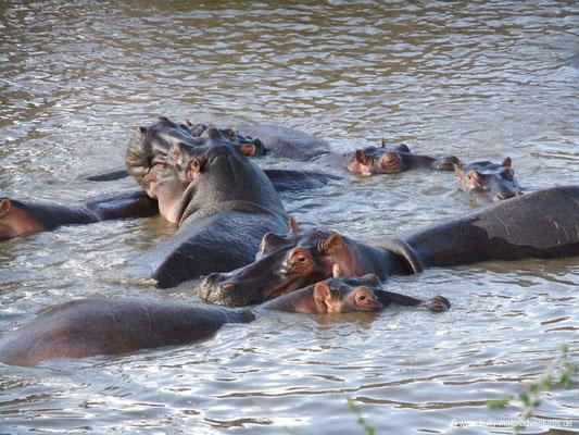 Tansania - Serengeti - Hippo-Pool