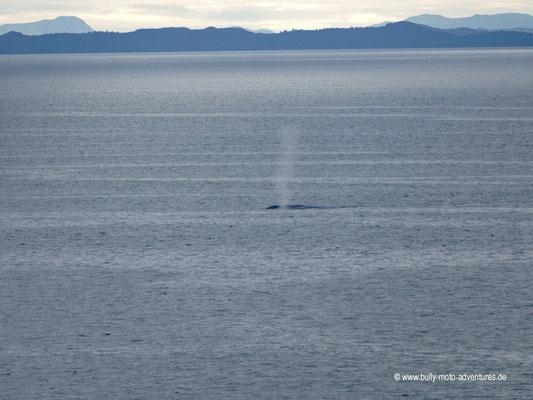 Chile - Fährfahrt von Puerto Natales nach Puerto Montt - Tag 3 - Walbeobachtung