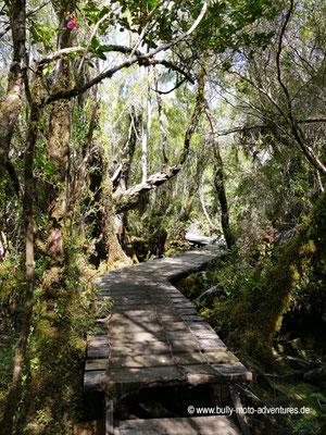Chile - Insel Chiloé - Parque Nacional Chiloé - Sendero Tepual