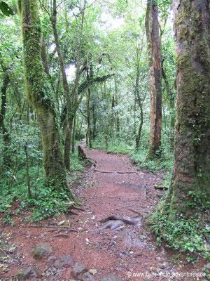 Tansania - Besteigung des Kilimanjaro - Marangu Route - Regenwald