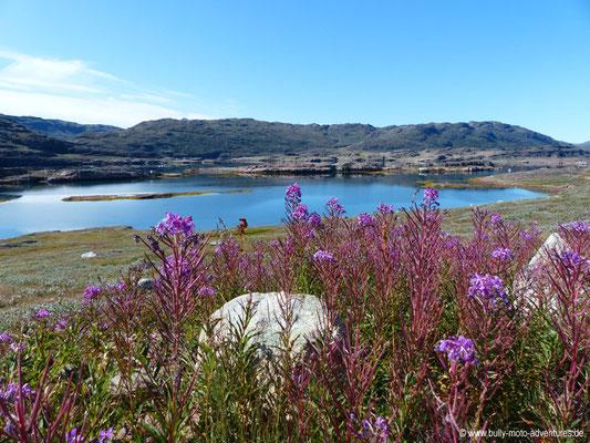 Grönland - Wanderung zum Gehöft Tasiusaq