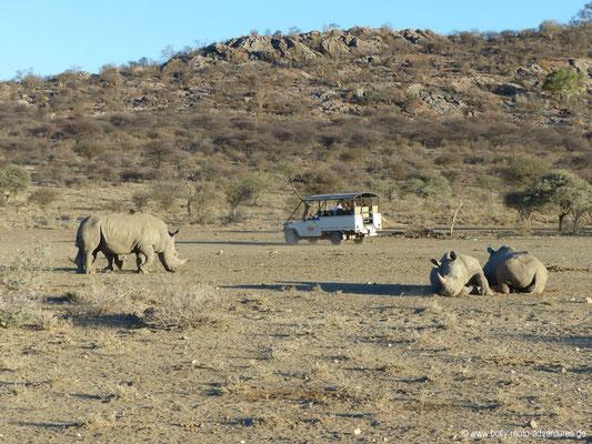 Namibia - Mt. Etjo Wildreservat - Nashorn