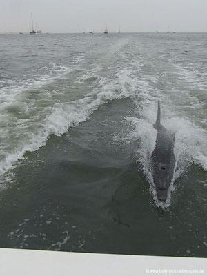 Namibia - Bootstour in der Bucht von Walvis Bay - Delphin
