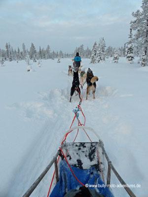 Finnland - Lappland - Auf Husky-Safari
