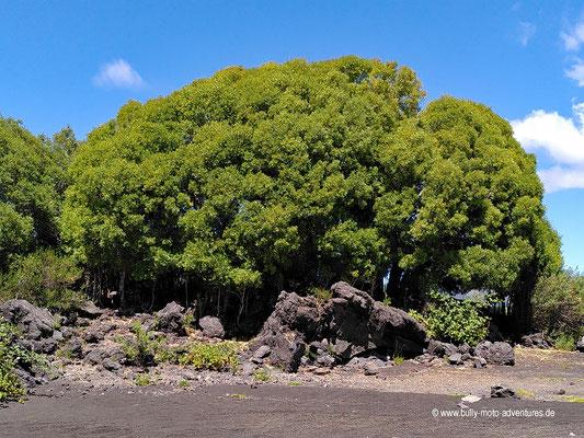 Chile - Parque Nacional Conguillío - Laguna Verde