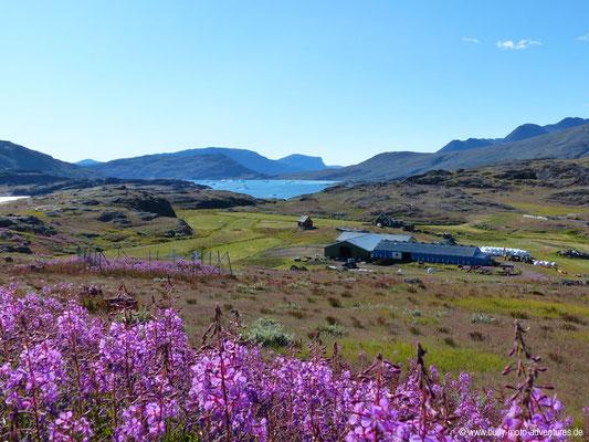 Grönland - Wanderung von Qassiarsuk nach Tasiasuaq - Blick auf den Sermilik Eisfjord