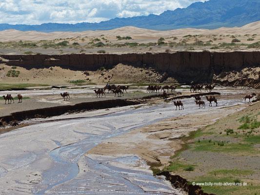 Mongolei - Kamelreiten