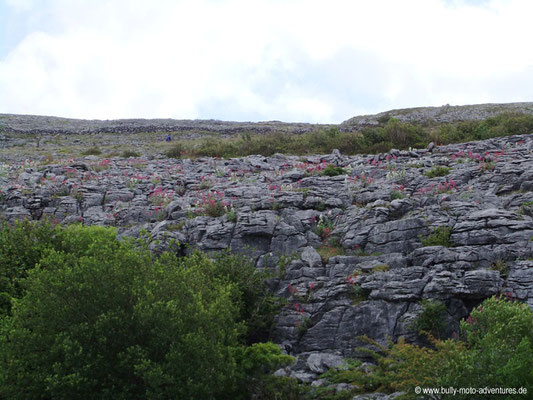 Irland - The Burren - Aillwee Caves - Co. Clare