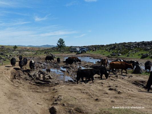 Mongolei - Orkhon-Tal