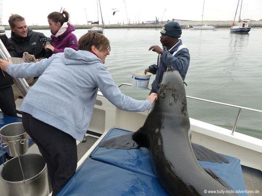 Namibia - Bootstour in der Bucht von Walvis Bay - Robbe
