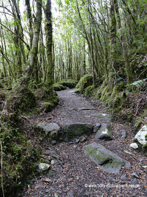 Chile - Parque Nacional Queulat
