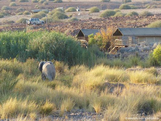 Namibia - Elefantenbesuch in der Palmwag Lodge