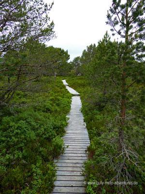 Norwegen - Straße Fv17 - Landschaftsroute Helgelandskysten - Wanderpfad in Furøy
