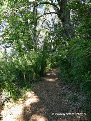 Chile - Reserva Nacional Malalcahuello - Wanderweg Piedra Santa