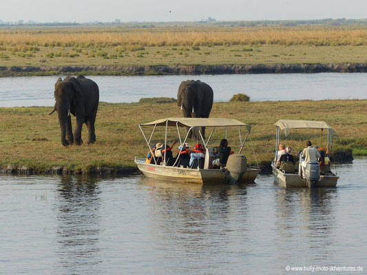 Botswana - Chobe Nationalpark - Elefanten