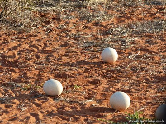 Namibia - Wildreservat der Auob Lodge - Straußeneier