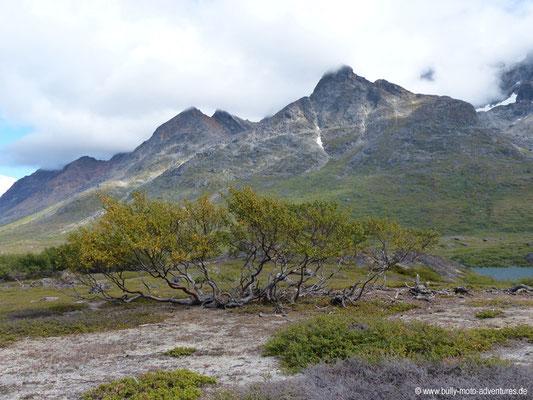 Grönland - alpine Landschaft