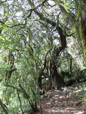 RegenwaldTansania - Besteigung des Kilimanjaro - Marangu Route -