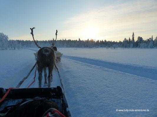 Finnland - Rentier-Safari