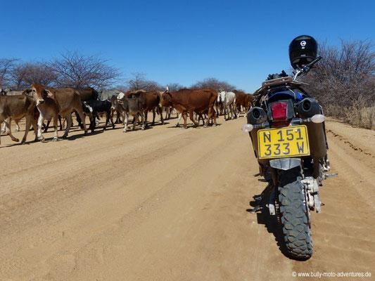 Namibia - Gegenverkehr