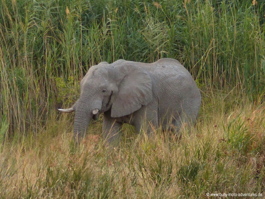 Namibia - Palmwag Lodge - Elefant