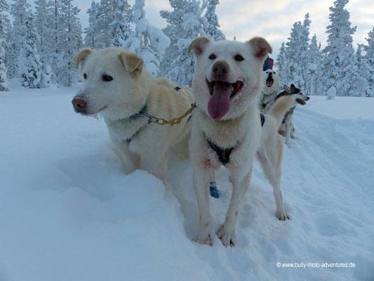 Finnland - Husky-Safari - Kurze Pause im Schnee