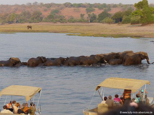 Botswana - Chobe Nationalpark - Elefantenherde durchquert Fluss