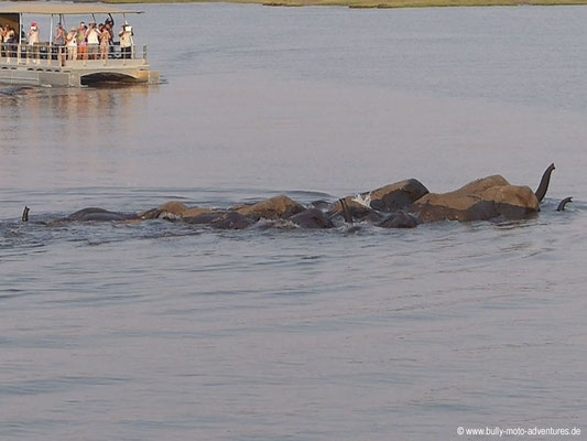 Botswana - Chobe Nationalpark - Elefantenherde durchquert den Fluss