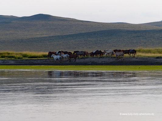 Mongolei - Fluss Tuul bei Lun