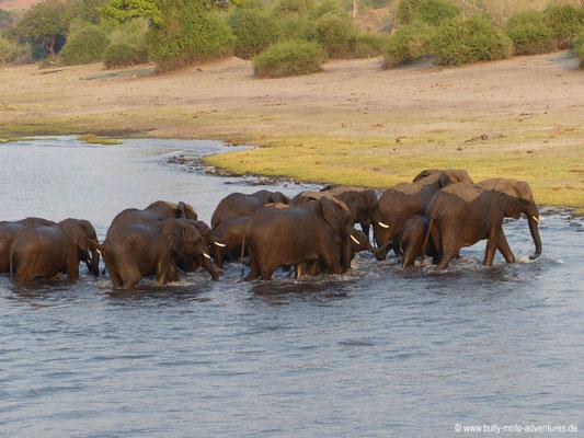 Flussdurchquerung von Elefanten