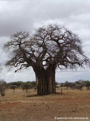 Tansania - Tarangire Nationalpark - Baobab