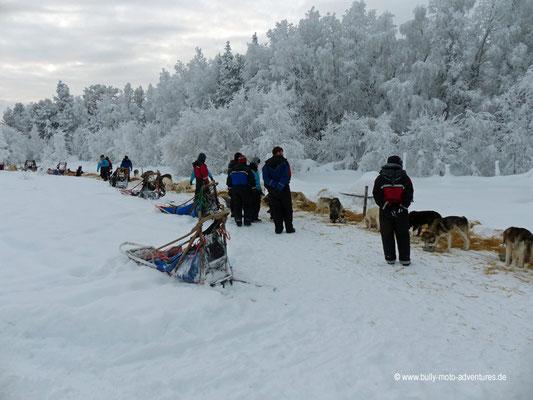 Finnland - Lappland - Auf Husky-Safari - Verpflegung der Huskys