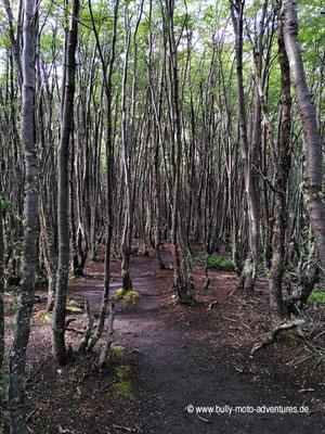 Argentinien - Parque Nacional Tierra del Fuego - Wanderweg Senda de la Baliza