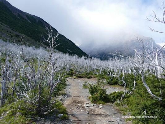 Chile - Parque Nacional Torres del Paine - W-Trek - Wanderung zur Paine Grande Lodge