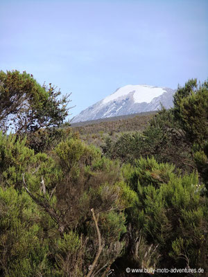 Tansania - Besteigung des Kilimanjaro - Marangu Route - Blick auf den Kibo