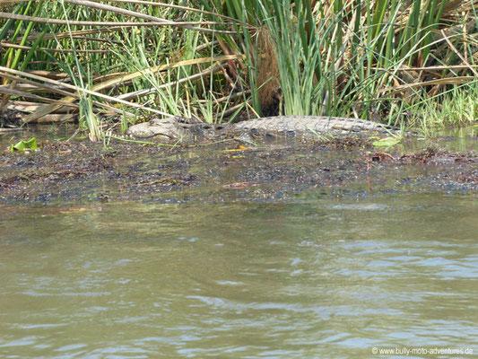 Botswana - Okavango Delta - Krokodil ohne Oberkiefer