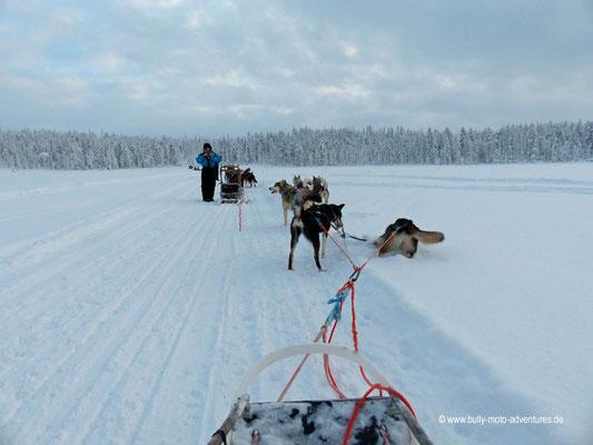 Finnland - Husky-Safari - Abkühlung im Schnee