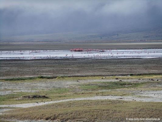 Tansania - Ngorongoro Krater - Flamingos